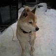 DOG by yuuki