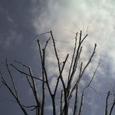 冬の空に手を広げる木 by 昨日旅人