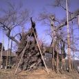 樹齢2000年の神代桜 by DAI