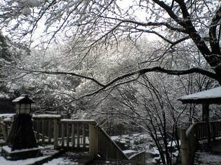 雪の石神井川公園