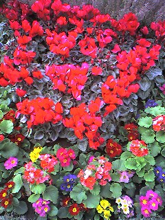 花 by itokoichi